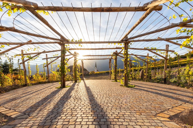 Kellerei Bozen / Rottensteiner Outside Green Projects